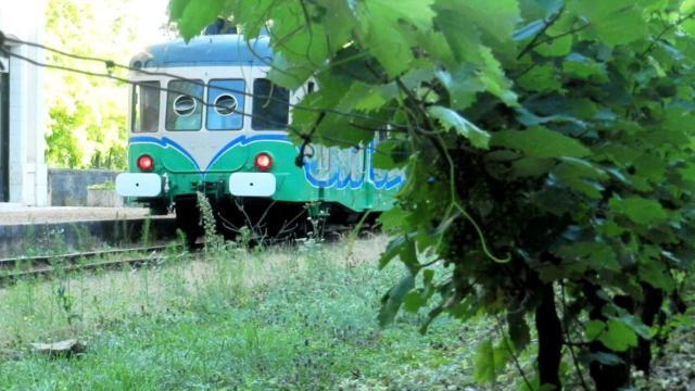 Train touristique en arrière plan avec pieds de vigne en premier plan sur Thoré-la-Rochette