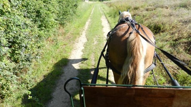 Balade en calèche dans les vignes de Thoré-la-Rochette