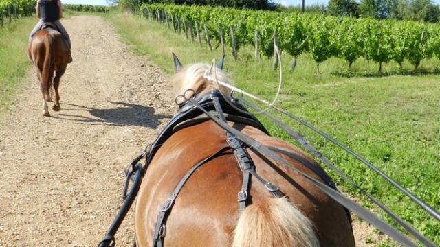 Praline dans les vignes de Thoré-la-Rochette