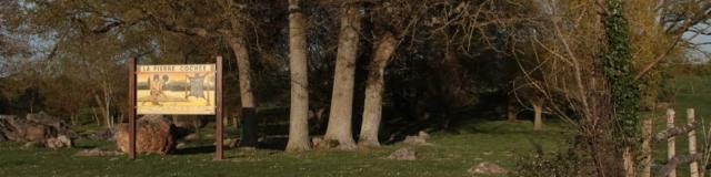 Arbres sur le site de la Pierre Cochée à Droué