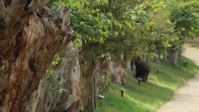Maison Botanique de Boursay, chemin des Trognes