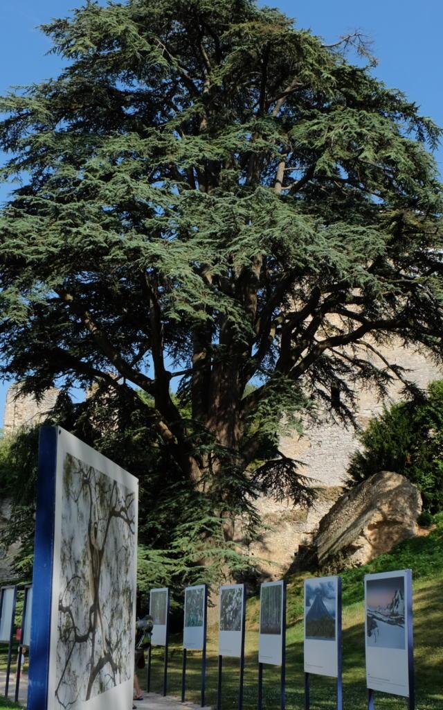 Festival Promenades Photographiques à Vendôme- Parc du château