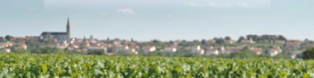 Vignes vins randos dans les coteaux du Vendômois en 2019