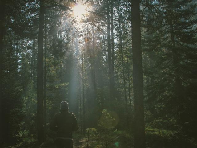 Running en forêt