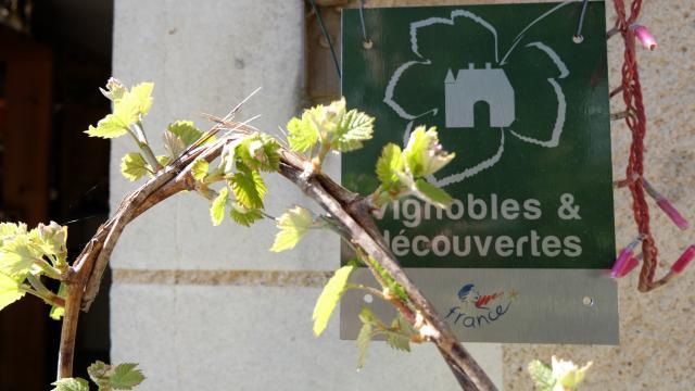 Vignobles & Découvertes-Vignobles en Vallée du Loir