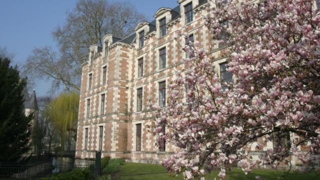Magnolia en fleur devant l'Hôtel de ville de Vendôme