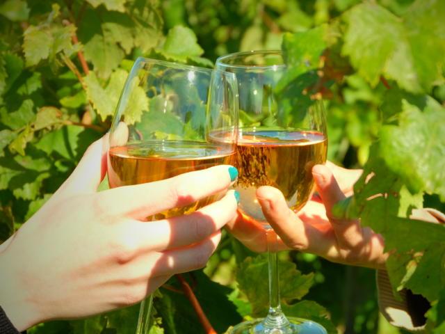 Mise en scène, deux verres de vin parmis des feuilles de vignes