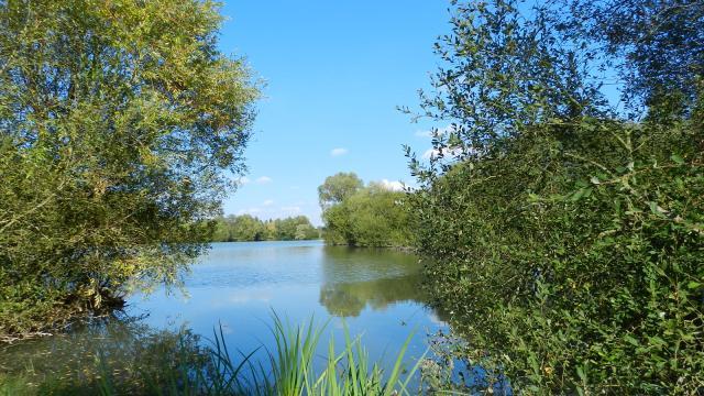 Plein air - étang de St-Firmin-des-Prés